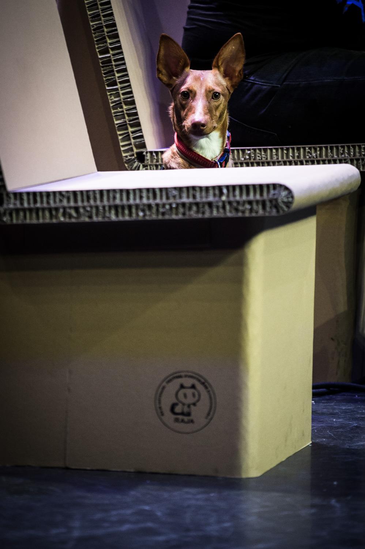 Rencontre Internationale avec Joann Sfar. Autour de Corben et la Fantasy. Le chien de Joann Sfar sur scène. Espace Franquin.
